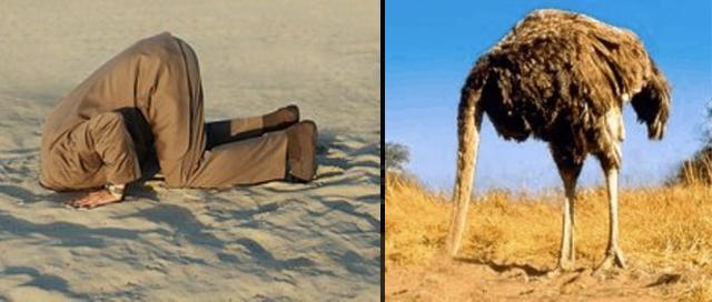 2011_12_1_ostrich